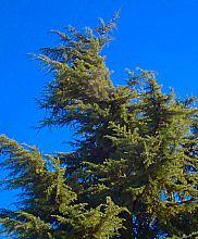 [Windy tree]